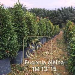 Eugenia Oleina 1M 13*15
